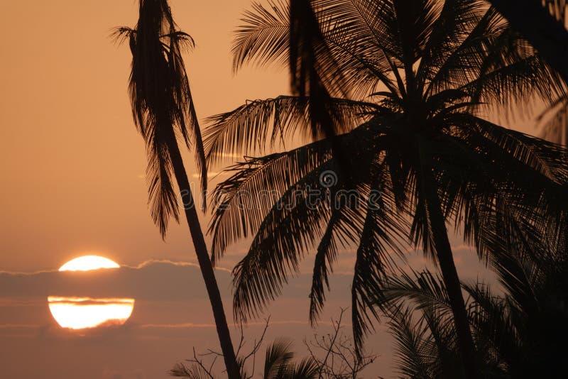 Palmträdkontur på solnedgången med den stora solen bak moln royaltyfri fotografi