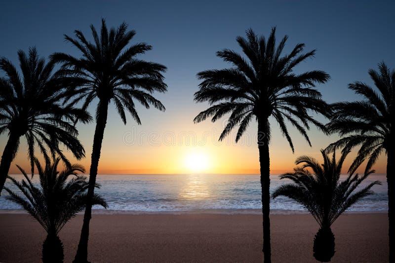 Palmträdkonturer arkivbild