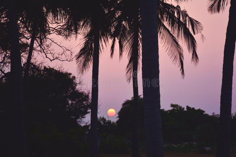 Palmträdkonturer med solen på bakgrunden Solnedgång i vändkretsar, Sri Lanka royaltyfria bilder
