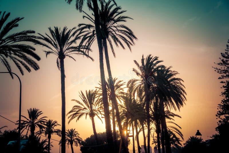 Palmträdkonturer mot ljus solnedgånghimmel, Majorca ö, Spanien royaltyfri bild