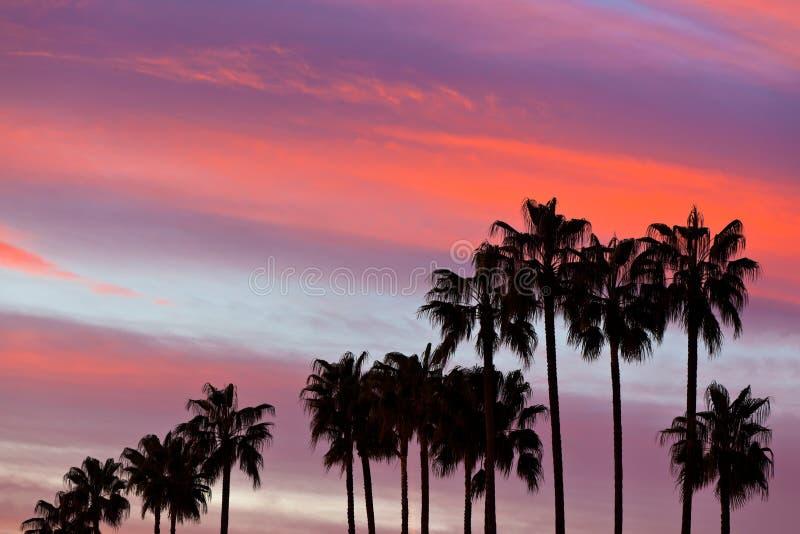 Palmträdkonturer på solnedgånghimmelbakgrund royaltyfri foto