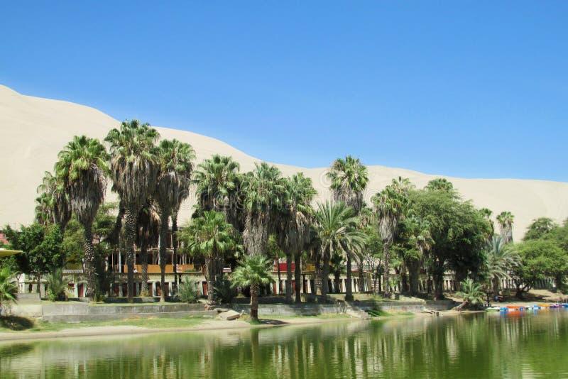 Palmträdoasby nära sjön royaltyfri bild