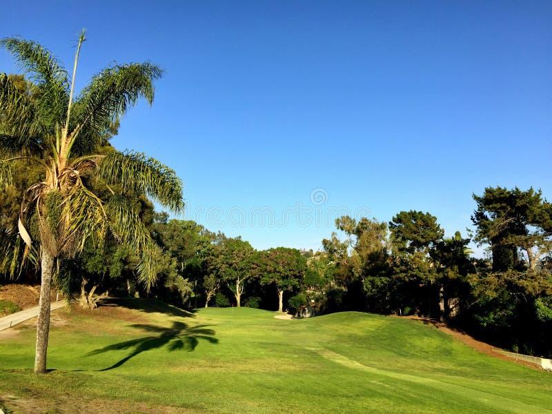 Palmträdparadis fotografering för bildbyråer