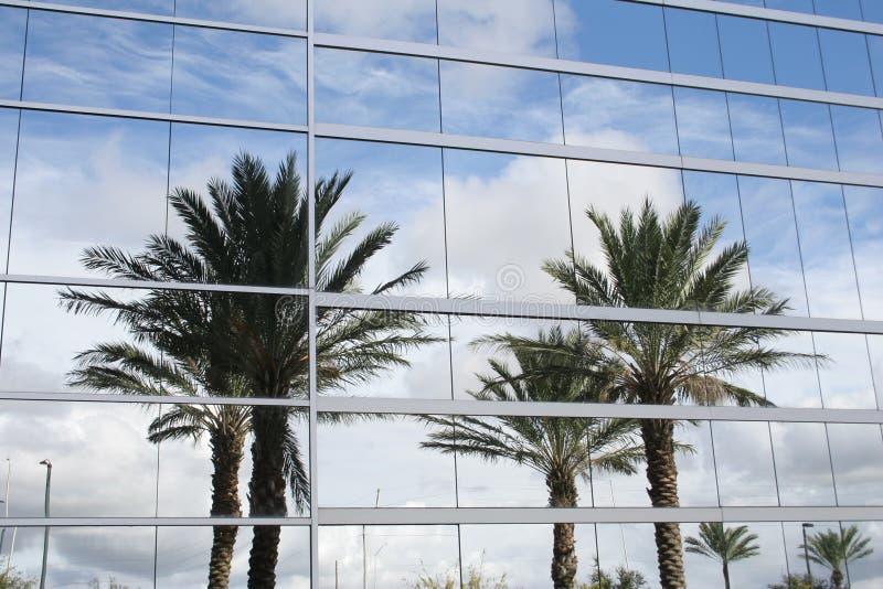 Palmträdreflexion arkivbild