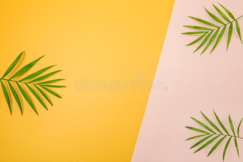 Palmträdsidor på rosa färg- och gulingbakgrund royaltyfria bilder