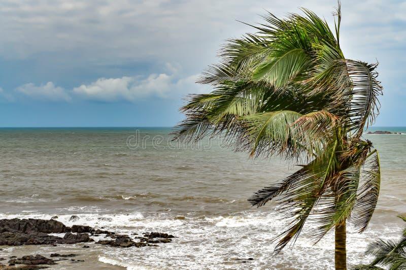 Palmträdsidor som prasslar i cyklonartade vindar i grov säsong med vita moln i blå himmel och klar horisont royaltyfri foto