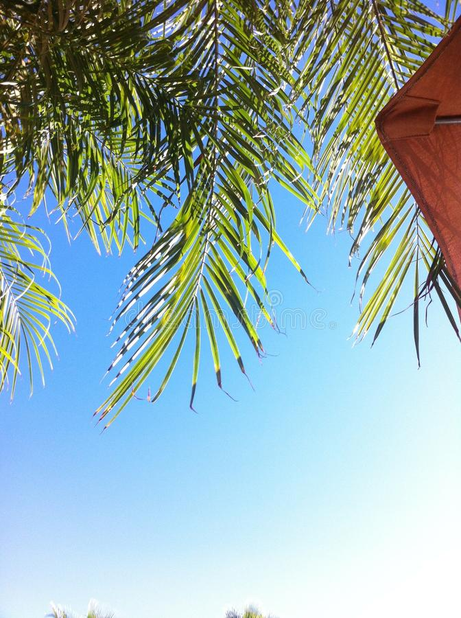 Palmträdsikt arkivfoton