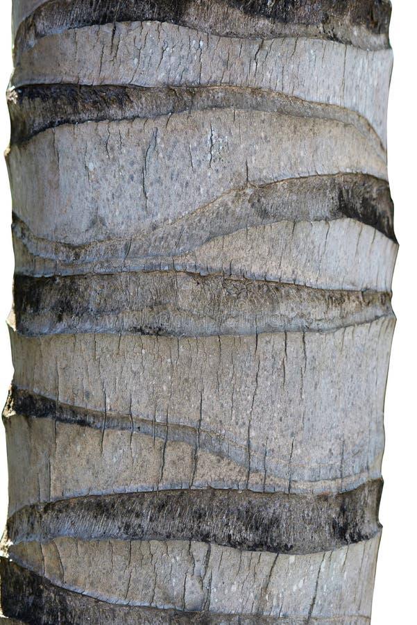 Palmträdskäll royaltyfria foton