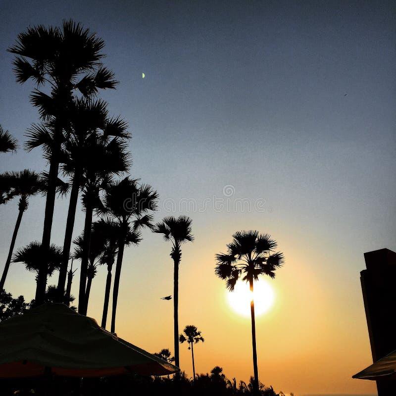 Palmträdsolnedgång och måne arkivbild