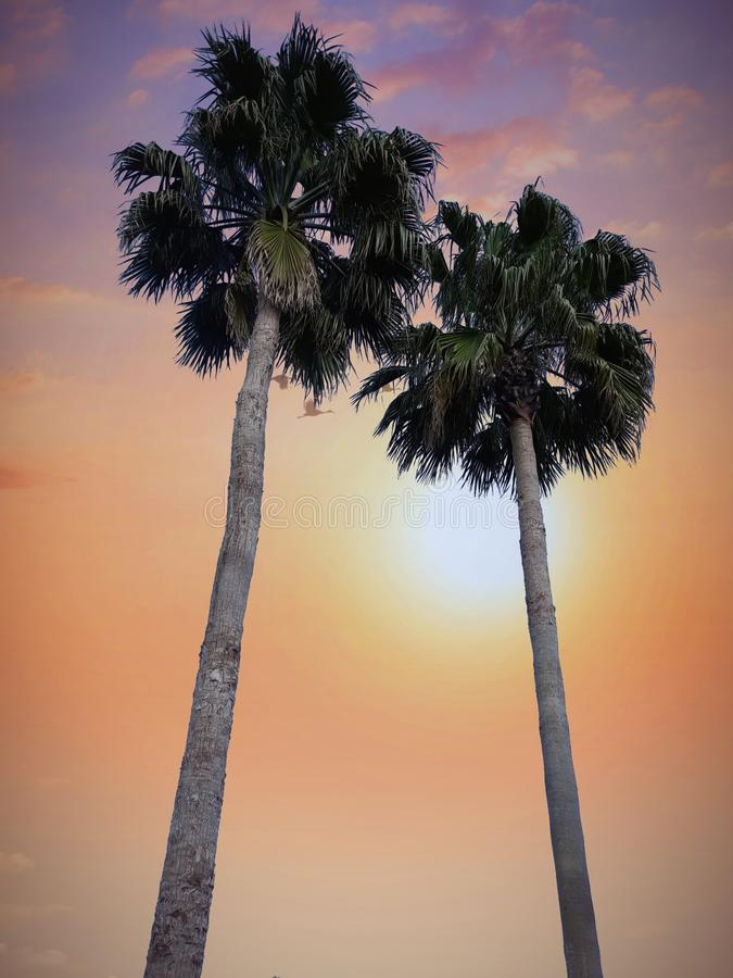 palmträdsolnedgången går orange afton för blommor arkivfoton