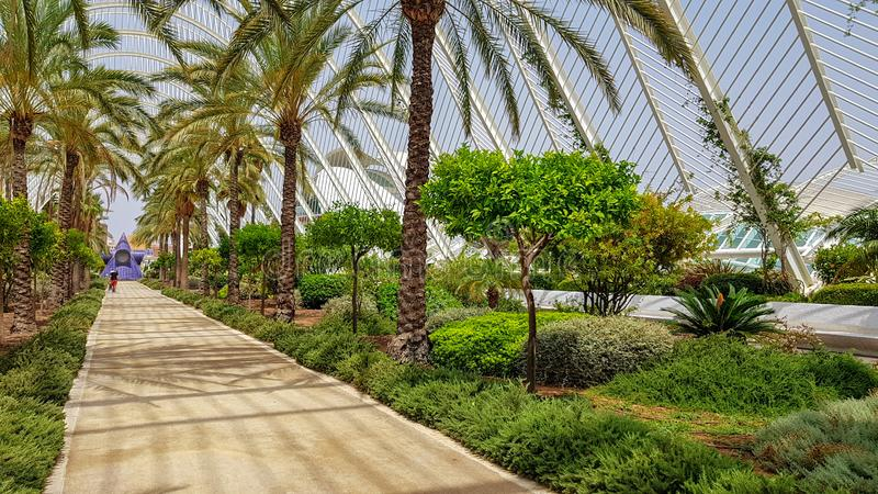 Palmträdsommarpromenad Spanien Valencia arkivbild