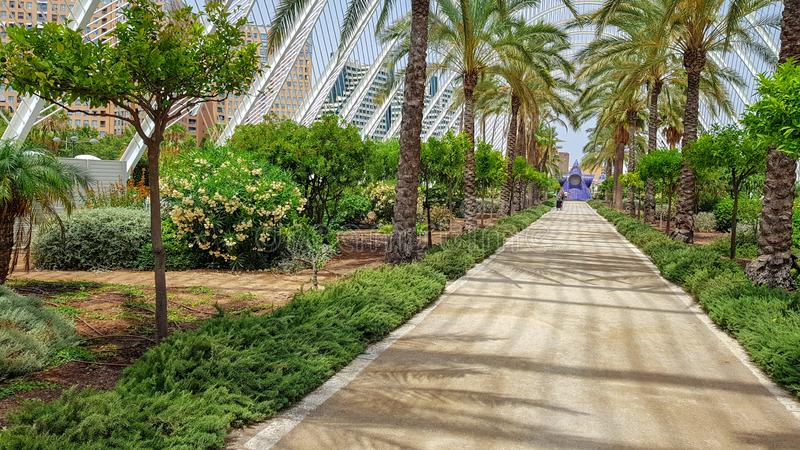 Palmträdsommarpromenad Spanien Valencia royaltyfri foto