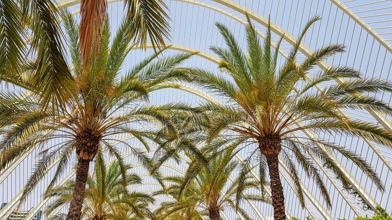 Palmträdsommarpromenad Spanien Valencia royaltyfria bilder