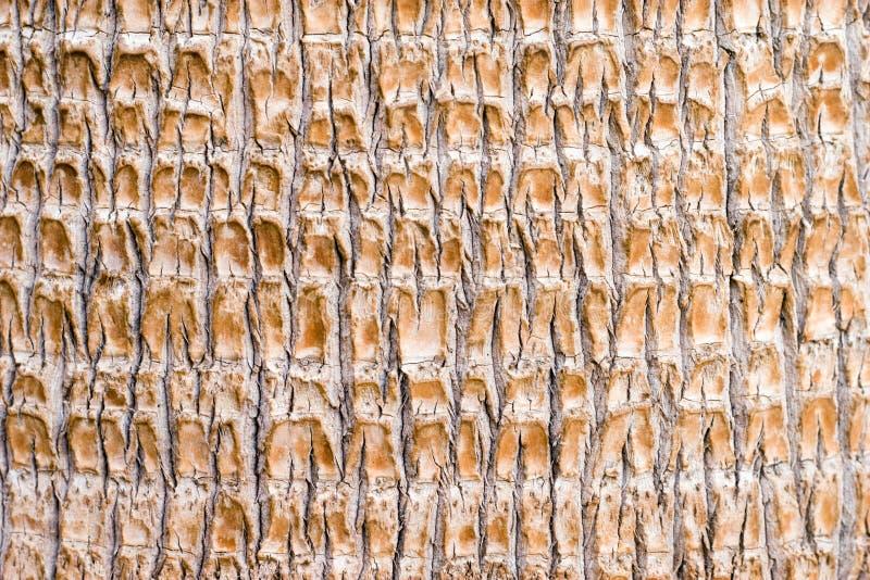 palmträdstam arkivbilder