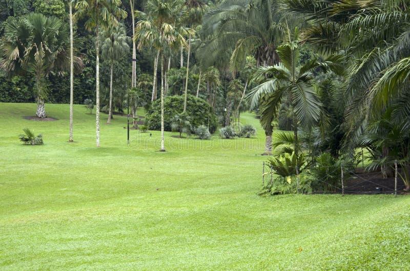 Palmträdträdgård fotografering för bildbyråer