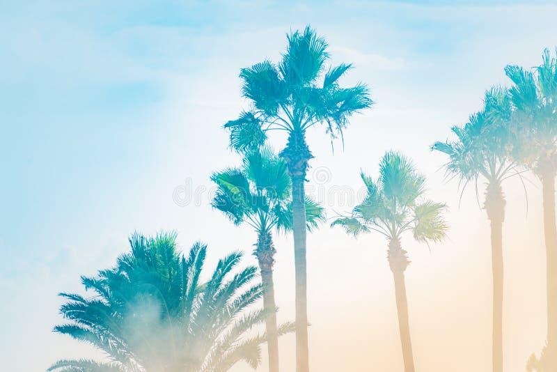 Palmträduder strålarna av sommarsolen i en dimmig morgon royaltyfria bilder
