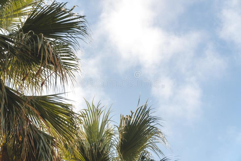 Palmtr?d i en tropisk semesterort p? den h?rliga soliga dagen Bild av den tropiska semestern och solig lycka trassla ihop begrepp arkivbild