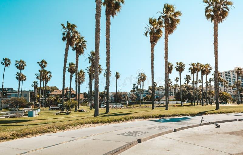 Palmtr?d p? den Santa Monica stranden royaltyfri foto