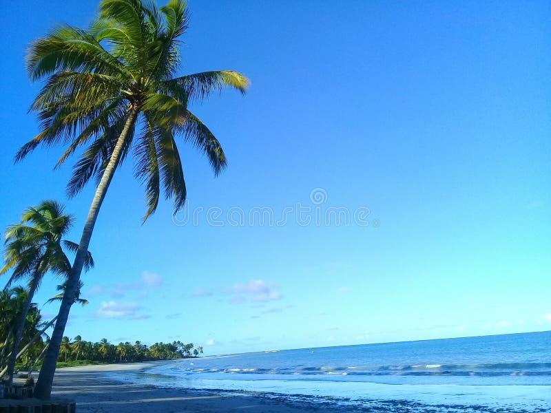 Palmtr?d p? stranden arkivfoto
