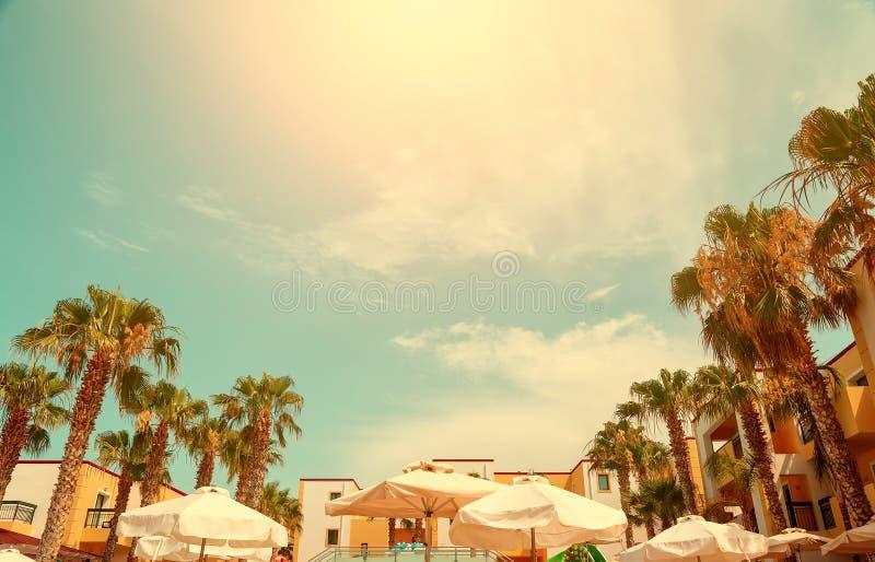 Palmtr?dhimmelsol och tak av det europeiska hotellet med paraplyer i naturramen, ljus solig dag, begreppet av en semesterort arkivbilder