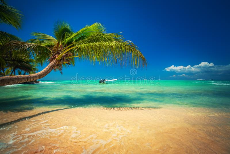 Palmtree和热带海滩 异乎寻常的海岛Saona在加勒比海,多米尼加共和国 免版税库存图片