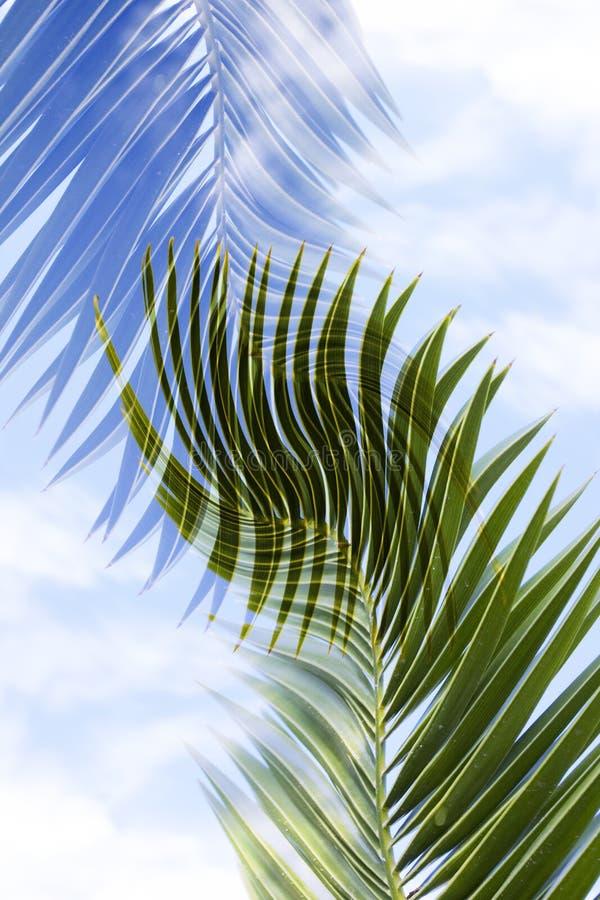 palmtree листьев стоковое изображение