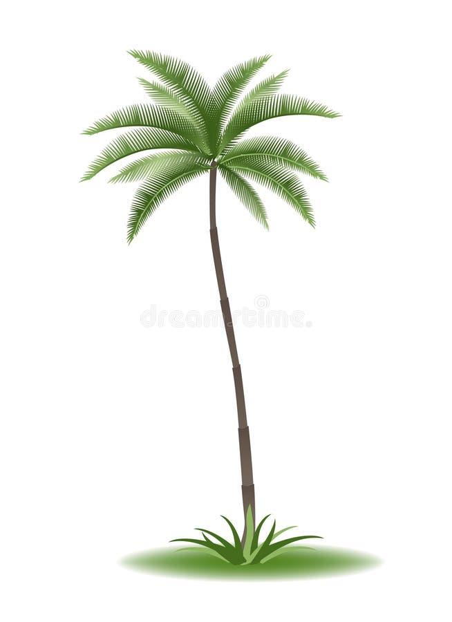 palmtree 向量例证