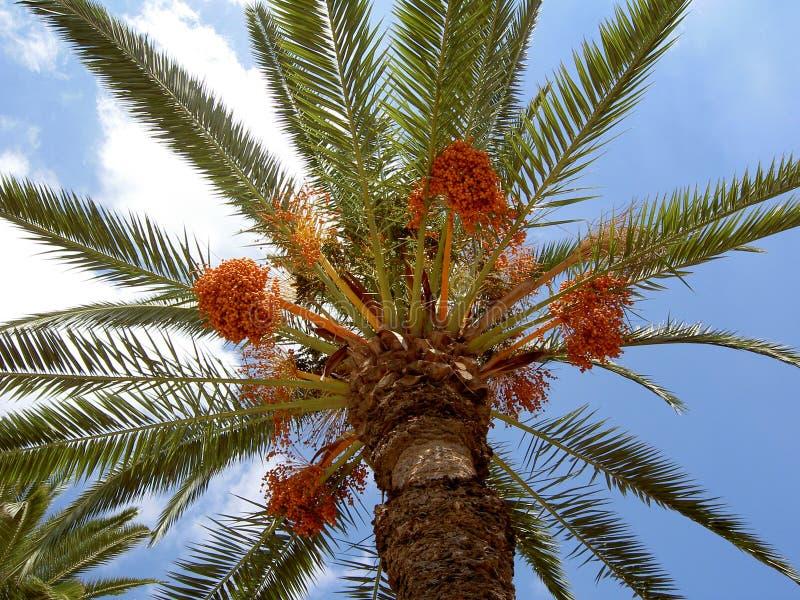 Palmtree imágenes de archivo libres de regalías