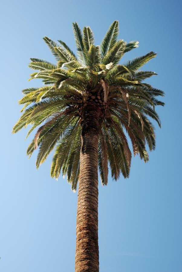 Palmtree images stock