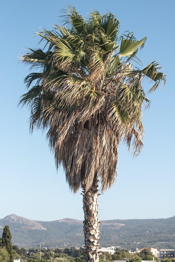 Palmtree photos stock
