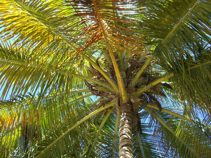 Download Palmtree stock photo. Image of beach, palmtree, covering - 4269310