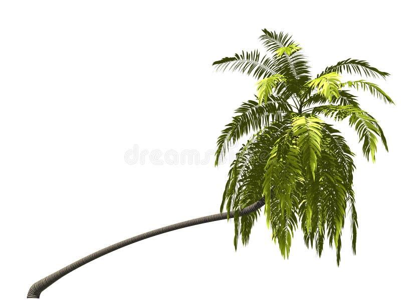 Palmtree foto de archivo