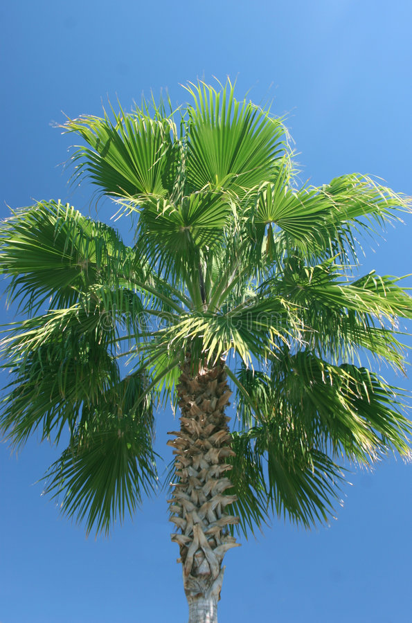Palmtree stock images