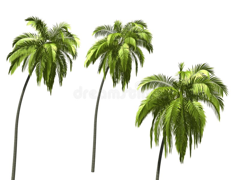 Palmtree royalty-vrije stock afbeelding