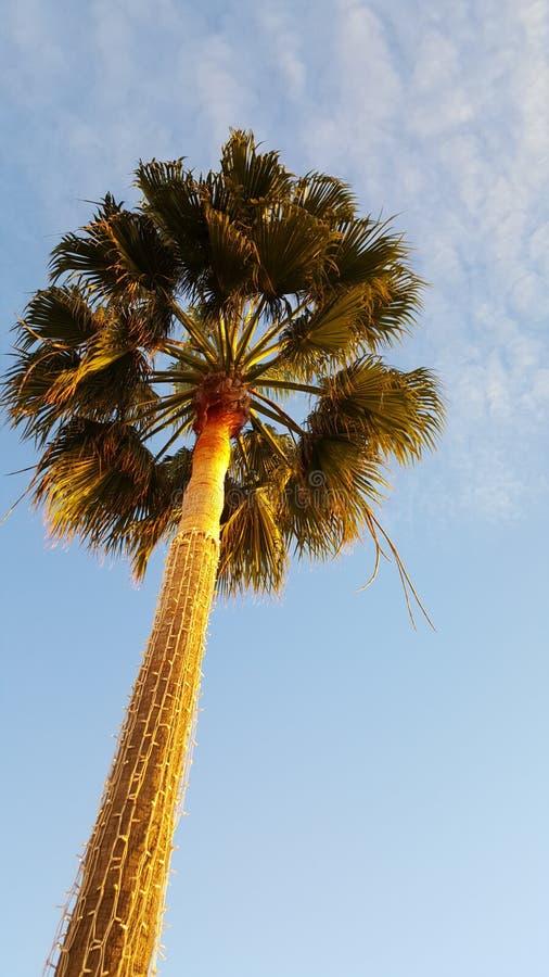 Palmtree стоковые изображения rf