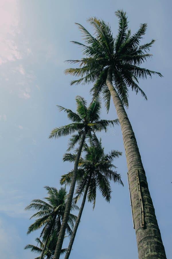 Palmtree stockfotografie