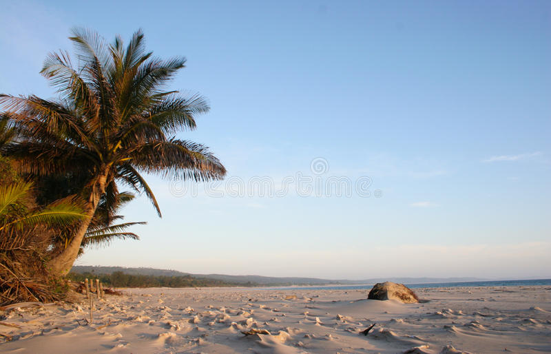 Palmtree auf Strand stockbilder