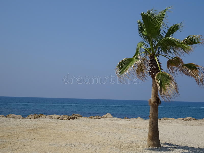 Palmtree at the beach stock photography