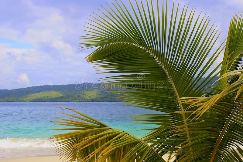 Palmtree branch and Caribbean beach, Dominican republic. Palmtree branch and Caribbean beach (Cayo Levantado), Dominican republic stock photos