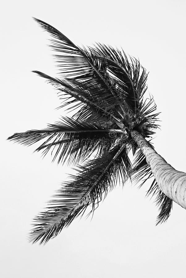 Palmtree Detail Royalty Free Stock Images