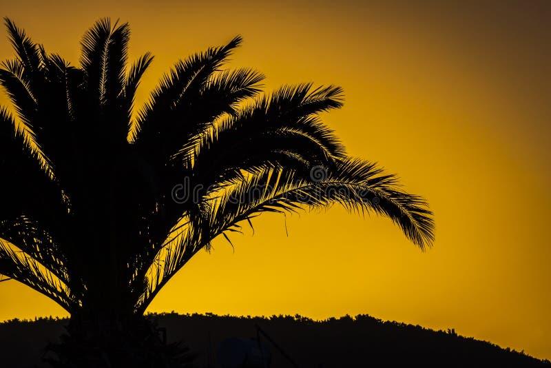 Download Palmtree En Contraluz En Puesta Del Sol Turca Imagen de archivo - Imagen de turismo, trópico: 100528857