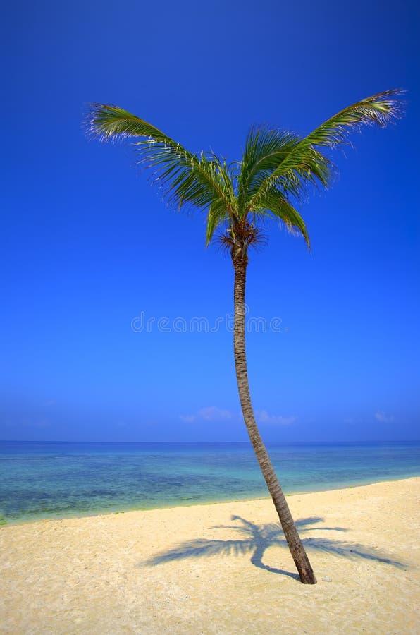 Palmtree está em um console desinibido imagens de stock royalty free