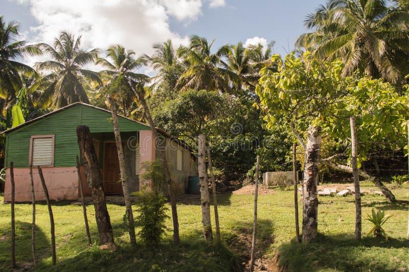 Palmtree groene in openlucht blauwe hemel van het kamphuis stock afbeelding