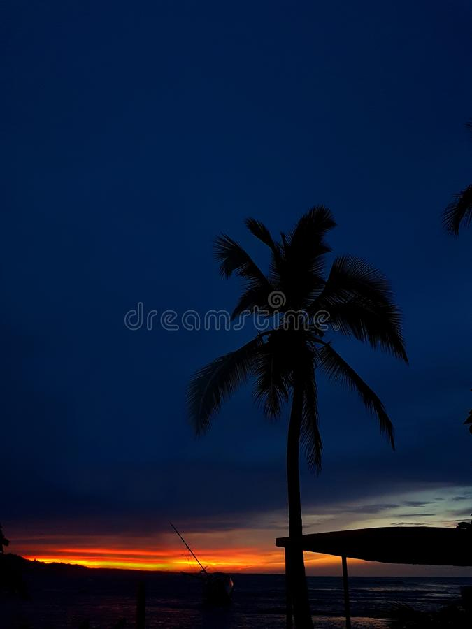 Palmtree-Kontrast, Strand-Paradies, Puerto Viejo lizenzfreies stockfoto