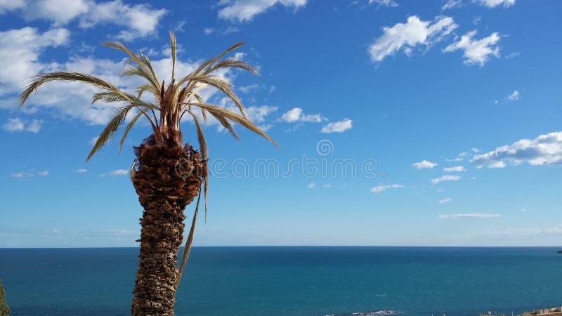 Palmtree par la mer avec un ciel bleu image stock