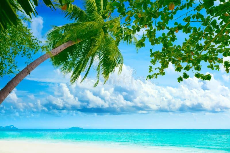Palmtree sulla spiaggia fotografie stock libere da diritti