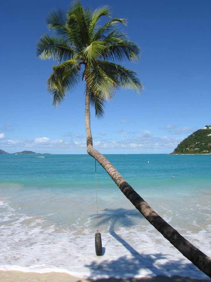Palmtree, Tortola photographie stock