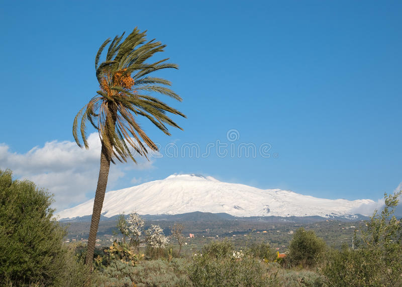 Download Palmtree And Volcano Etna stock photo. Image of plant - 12778710