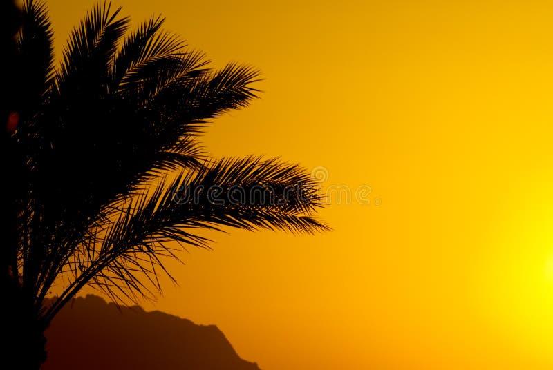 Palmtree y puesta del sol ilustración del vector