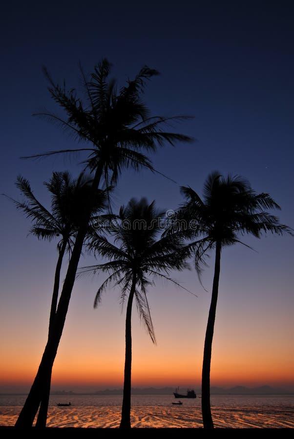 Palmtrees à l'aube photographie stock